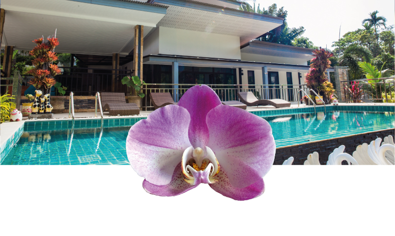 Sunrise Villa Orchid